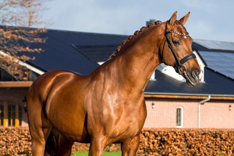 KWPN | Royal Dutch Sport Horse - News