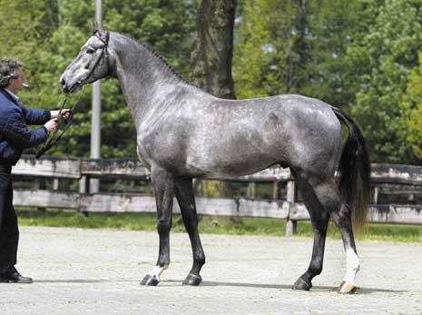 KWPN | Royal Dutch Sport Horse - Horse database page